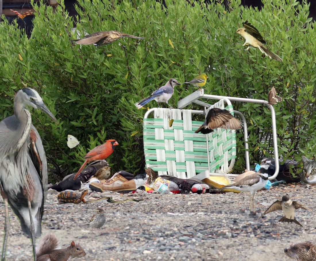 "Photoshopped version of the ""jumbled mess of a trash pile,"" complete with animals"