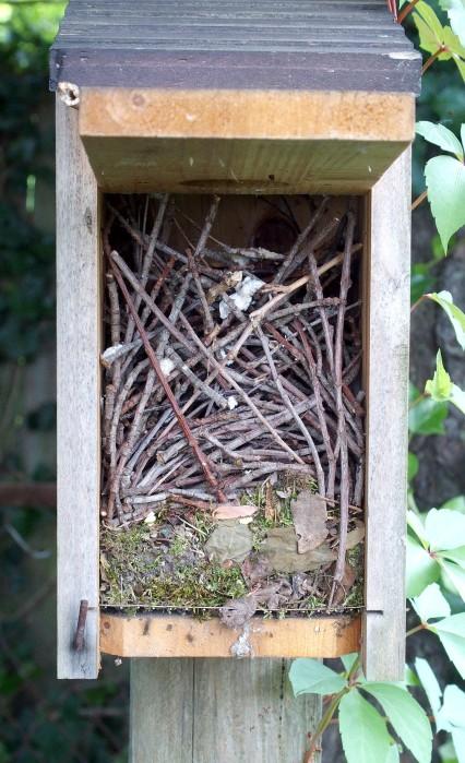 abandoned House Wren nest