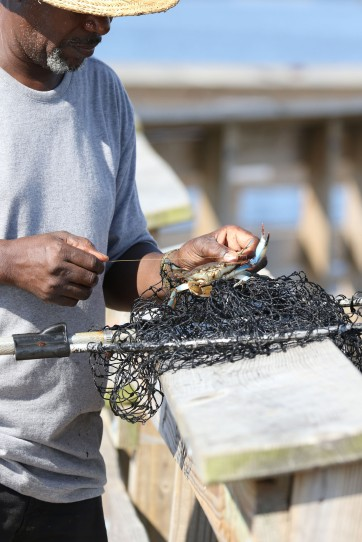 Man measuring a blue crab