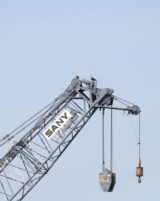 Osprey nest on a construction crane