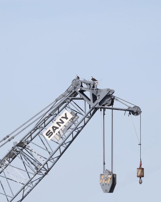 Osprey nest on a construction crane