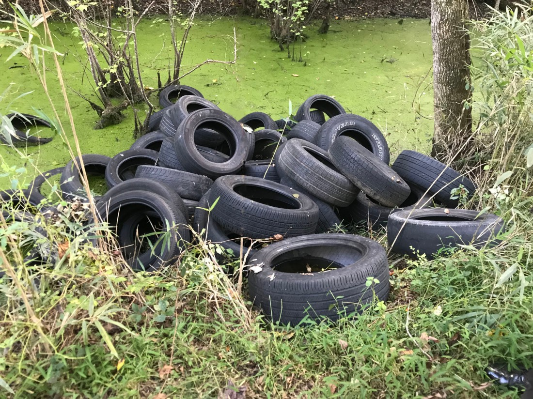 Tires dumped in the Great Dismal Swamp NWR