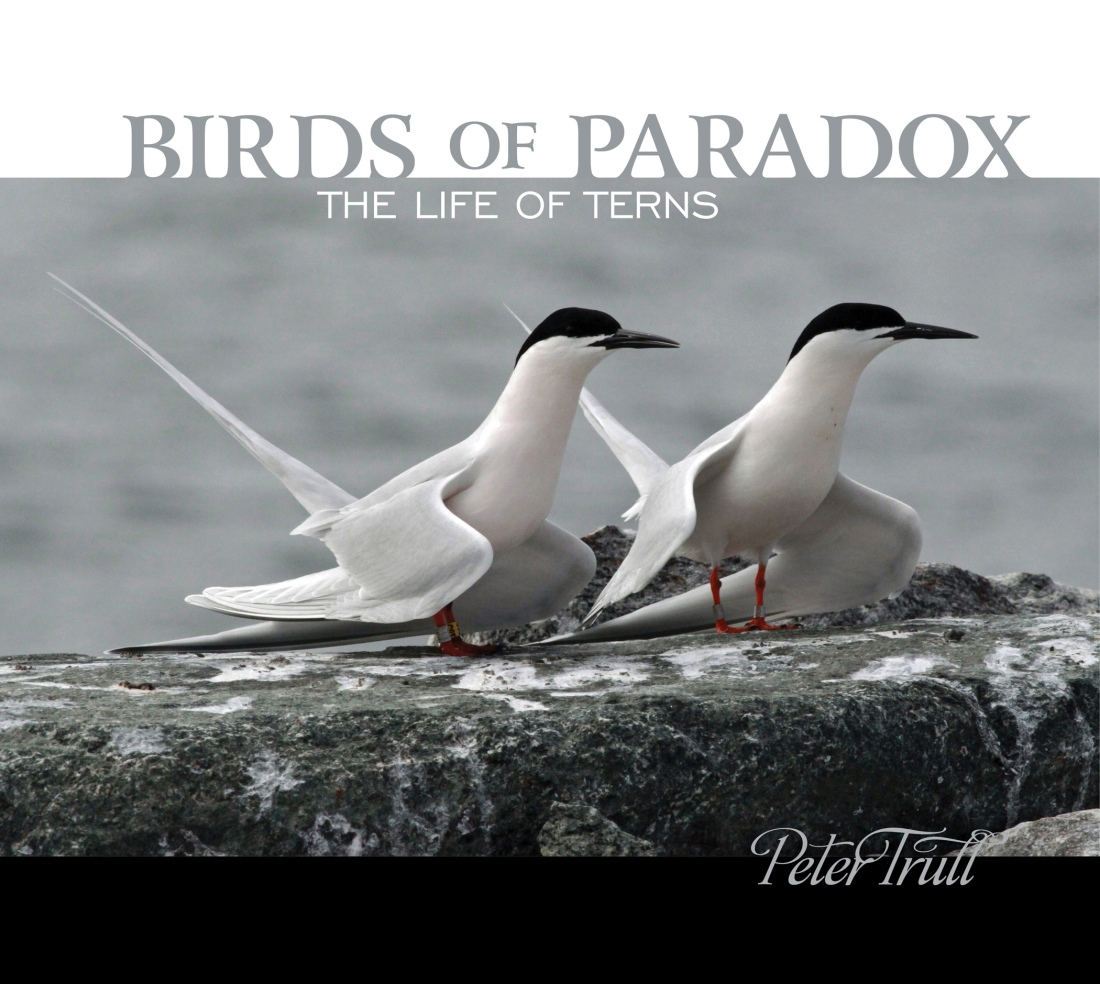 Birds of Paradox book cover