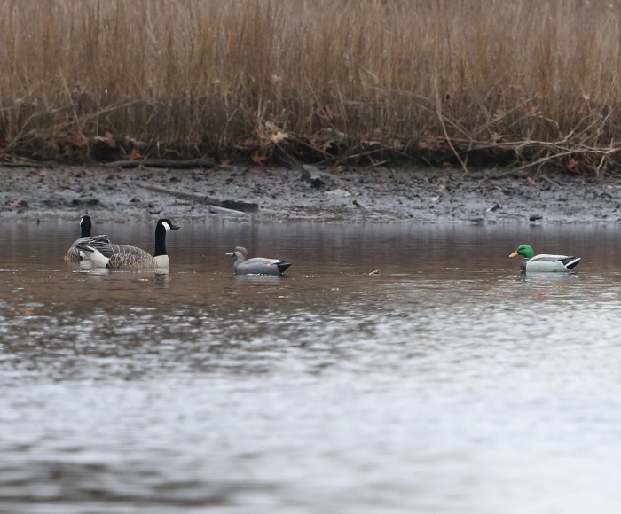 Waterfowl hunters' decoys